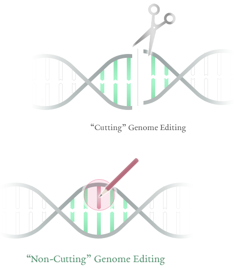 "Cutting"" genome editing ""Non-Cutting"" genome editing"